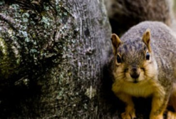 دانلود والپیپر سنجاب – Squirrel Wallpaper