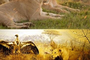 دانلود والپیپر های حیوان کیفیت 4K – شماره 1