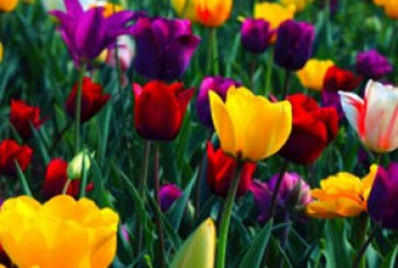 دانلود والپیپر گل های رنگارنگ