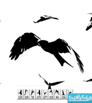 دانلود براش های فتوشاپ عقاب