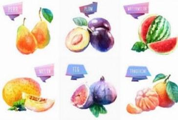 دانلود وکتور های میوه – طرح آبرنگ