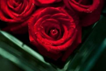 دانلود والپیپر گل های رز در گلدان