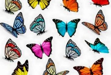 دانلود وکتور پروانه های رنگارنگ
