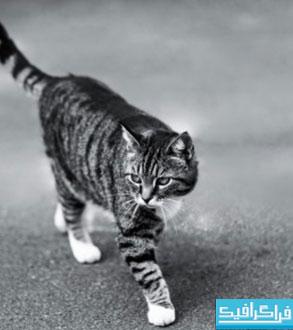 دانلود والپیپر دسکتاپ گربه