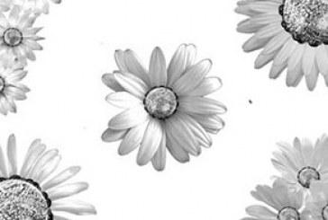 دانلود براش های فتوشاپ گل – شماره 6