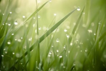 دانلود والپیپر چمن – Grass Wallpaper