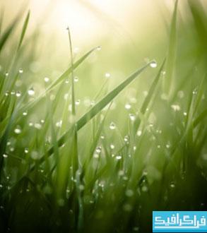 دانلود والپیپر چمن - Grass Wallpaper