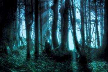 دانلود والپیپر جنگل اسرار آمیز