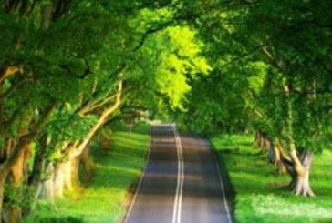 دانلود والپیپر جاده در تابستان