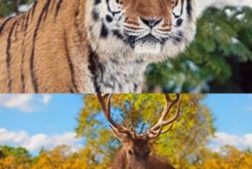 دانلود والپیپر های حیوان کیفیت 4K – شماره 5