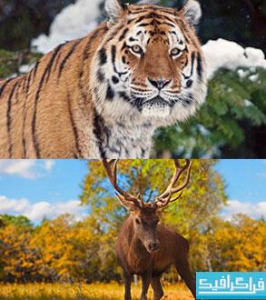 دانلود والپیپر های حیوان کیفیت 4K - شماره 5