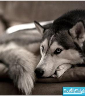 دانلود والپیپر دسکتاپ سگ