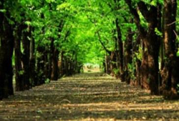 دانلود والپیپر مسیر درختان