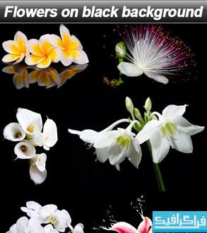 دانلود تصاویر استوک گل با پس زمینه سیاه