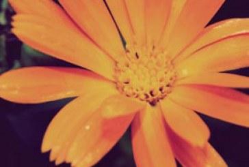 دانلود والپیپر های طبیعت کیفیت 4K – شماره 6