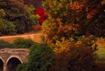 دانلود والپیپر پاییز – شماره 7