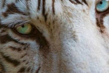 دانلود والپیپر های حیوان کیفیت 4K – شماره 7