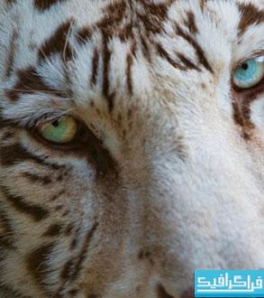 دانلود والپیپر های حیوان کیفیت 4K - شماره 7