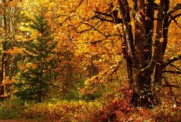دانلود والپیپر پاییز – شماره 8