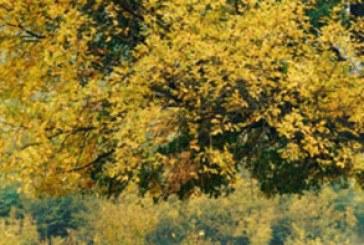 دانلود والپیپر پاییز – شماره 10