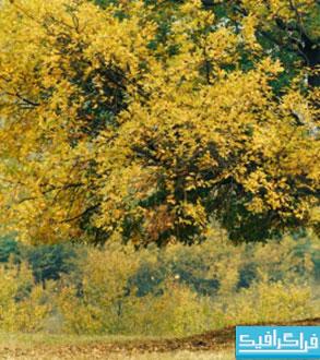 دانلود والپیپر پاییز - شماره 10
