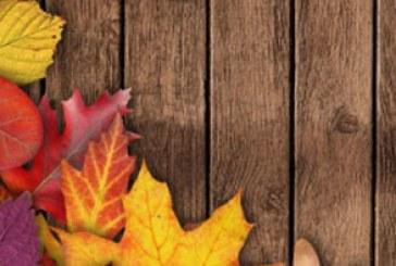 دانلود والپیپر پاییز – شماره 11