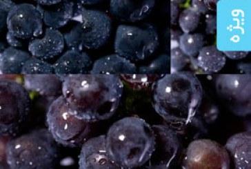 دانلود تصاویر استوک انگور با قطرات آب