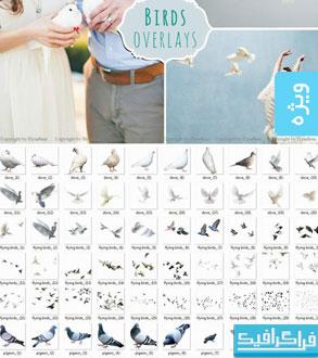 دانلود فایل لایه باز تصاویر پرندگان