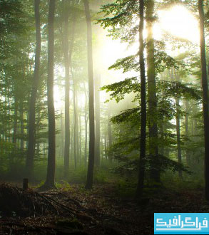 دانلود والپیپر های طبیعت کیفیت 4K - شماره 13