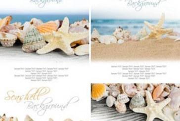 دانلود تصاویر استوک ستاره دریایی
