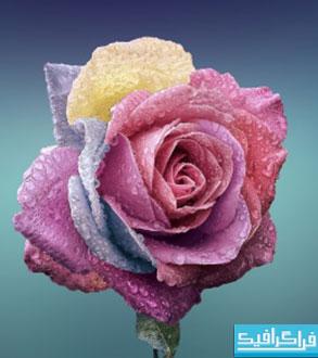 دانلود والپیپر گل رز رنگارنگ