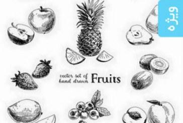 دانلود وکتور های میوه و سبزیجات – ترسیمی