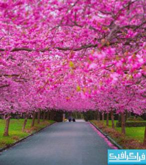 دانلود والپیپر بهار - شکوفه درخت - شماره 2