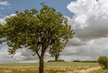 دانلود والپیپر طبیعت – فصل بهار