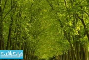 دانلود والپیپر دسکتاپ جاده سبز