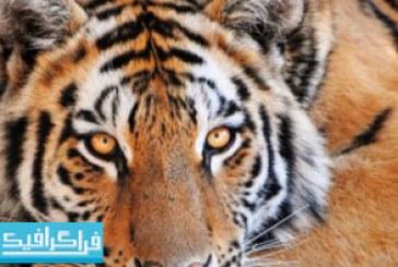 والپیپر حیوانات کیفیت 4K – شماره 9