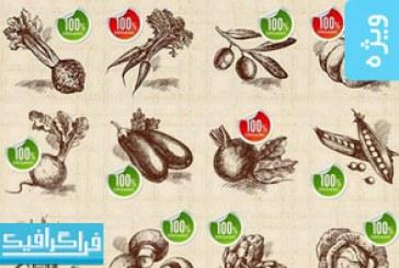 وکتور های میوه و سبزیجات – ترسیمی – شماره 2