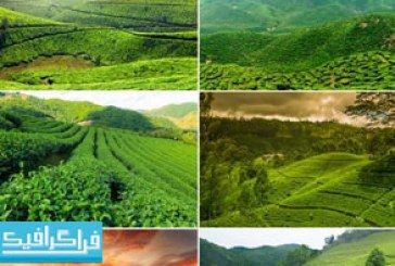 دانلود تصاویر استوک مزرعه چای سبز