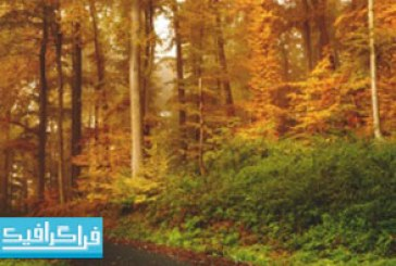 دانلود والپیپر فصل پاییز – شماره 12