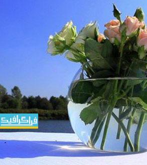 دانلود ویدئو فوتیج گل های رز در گلدان