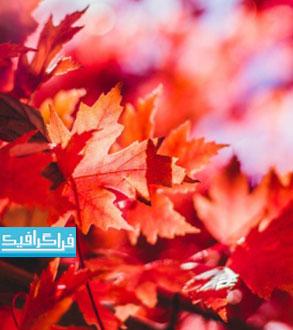 دانلود والپیپر برگ های قرمز فصل پاییز