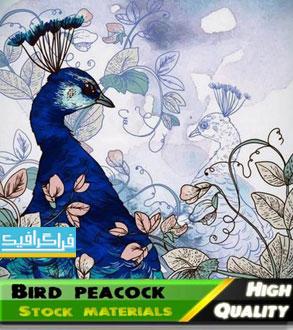 دانلود وکتور طرح های طاووس و پر طاووس