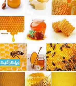 دانلود تصاویر استوک عسل و زنبور عسل