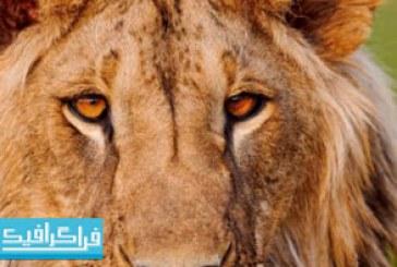 دانلود والپیپر حیوانات کیفیت 4K – شماره 11