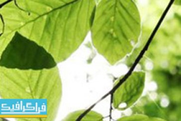 دانلود ویدیو فوتیج برگ های سبز – Green Leaves Footage