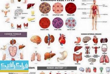 دانلود وکتور های اعضای داخلی بدن انسان – شماره 2