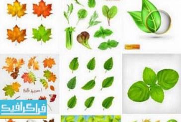 دانلود وکتور برگ های گیاه – طراحی واقعی
