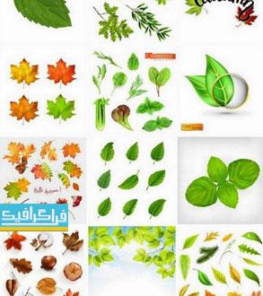 دانلود وکتور برگ های گیاه - طراحی واقعی