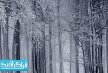 دانلود والپیپر جنگل برفی – شماره 2
