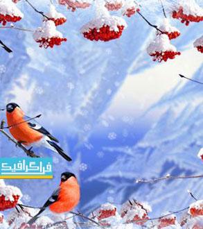 فایل لایه باز فتوشاپ قاب عکس زمستان برفی